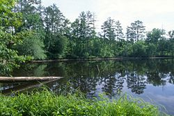 Uwharrie National Forest.jpg
