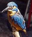 Valais Nature Museum - bird.jpg