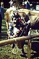 Viehscheid, Hindelang - geo.hlipp.de - 24619.jpg