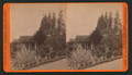 View in grounds of G.B. Adams. Alhambra, Cal, by O. E. Tyler.png