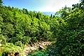 Vintgar Gorge (35811952155).jpg