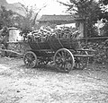 Voz s korpami (košarami), naložen z drvmi, da se bolj posušijo; sicer ne vozijo drv v korpah (košarah) 1951.jpg