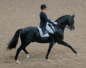 Warmblood - A Trakehner performing dressage.