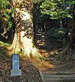 Wakashibamachi, Ryugasaki, Ibaraki Prefecture 301-0041, Japan - panoramio (2).jpg