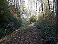 Waldweg Gulibachwald.jpg