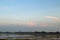 Wasserkoog Tetenbüll Blick auf Husumer Bucht 20.08.2011 19-05-27.jpg