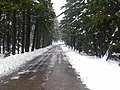 Wernigerode, Germany - panoramio - Eugeniy Meshcheryako… (62).jpg