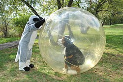 Furry in a giant hamster ball