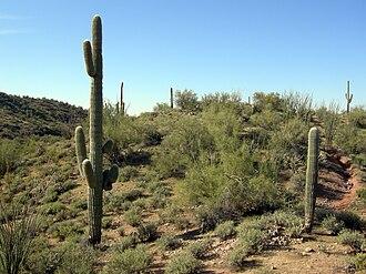 Wickenburg, Arizona - Sonoran Desert outside Wickenburg, Arizona