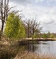 Wijnjeterper Schar, Natura 2000-gebied provincie Friesland 024.jpg