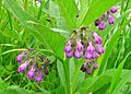 Wild flowers 3.jpg