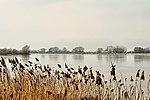Wilstone Reservoir (32402787716).jpg