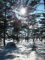 Winter in Kallahti Nature Conservation Area Helsinki.jpg