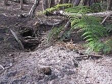external image 220px-Wombat_burrow-Narawntapu.JPG