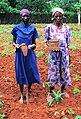 Women planting beans.jpg