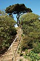 Wooden steps at Lepe Country Park - geograph.org.uk - 1010871.jpg
