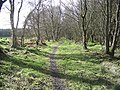 Woodland path - geograph.org.uk - 370302.jpg