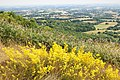 Worcestershire from Swinyard hill (43946923532).jpg
