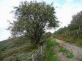Wye Valley Walk up Esgair Dernol - geograph.org.uk - 979586.jpg
