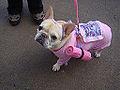 Yoga dog (4045140609).jpg