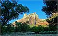 Zion Misc, Through the Trees 4-30-14c (14223577126).jpg