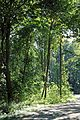 Zwin Natuurpark R16.jpg
