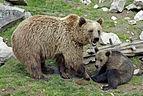 Ähtärin karhut 3.jpg