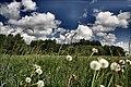 Łopuchówka - panoramio (74).jpg