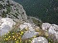Χλωρίδα στην κοιλάδα των Τεμπών.jpg