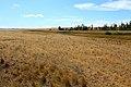 Балка Кишкентайсай. Вид в юго-западном направлении - panoramio (1).jpg