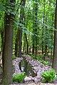 Ботанічний сад НУБіП DSC 0526.jpg