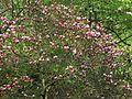Ботанічний сад ім. І.Фоміна IMG 8301.jpg