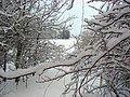 Вид из леса - panoramio.jpg
