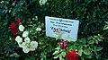 Гибридная роза Kordes, 1957.jpg