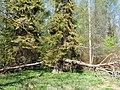 Дворцовый парк Гатчины-Palace Park in Gatchina - panoramio (10).jpg