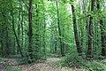 Дубово-грабові деревостани Собківського лісу.jpg