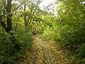 Зауральная роща в сентябре - panoramio.jpg