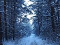Зимняя тропа.jpg