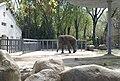 Киевский зоопарк (9).jpg