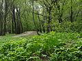 Парк весной.JPG
