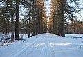 Парк лиственничная аллея зима Волышово.JPG