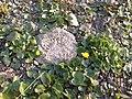 Перші весняні красуні Фото-0841.jpg
