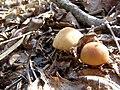 Пластинчаті гриби в заказнику Михайловичі.jpg