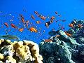 Рыбки - panoramio.jpg