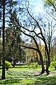 Сквер Шевченка у Хмельницькому.jpg