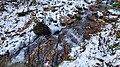 Струмок Кам'яний в Рахові- 2.jpg