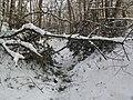 Украина, Киев - Голосеевский лес 157.jpg