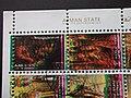 Фотография фрагмента блока Почтовых марок с типографским браком.DSCF7828 08.jpg
