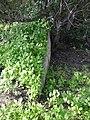 גבעת העמדות ברכס נשר ההיסטורי - בונקר מגורים בתחתית הגבעה (2).jpg