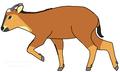 גוראל אדום (Naemorhedus baileyi) - איור של משתמש- מנחם.אל.png